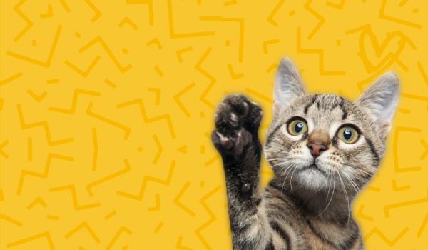 Banner Gato